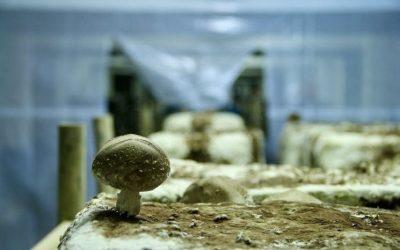 Création d'une ferme urbaine